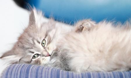 cat s wrestling photo
