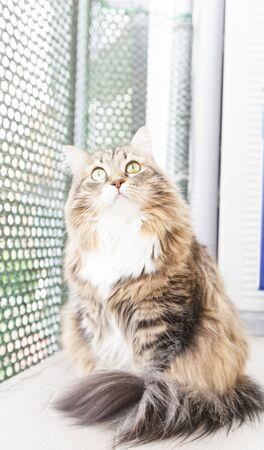 animalitos tiernos: gatito marrón blanco subterráneo Foto de archivo