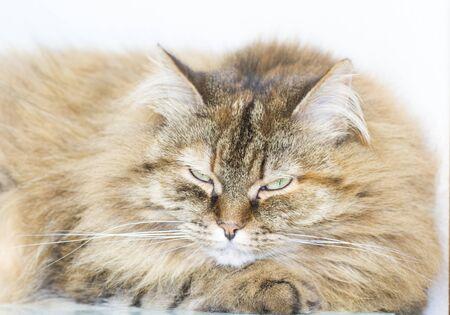 long haired: lovable kitten, long haired