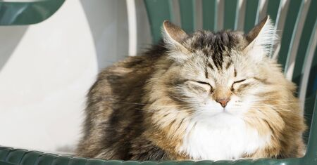 hypoallergenic: Female domestic cat on the garden chair Stock Photo