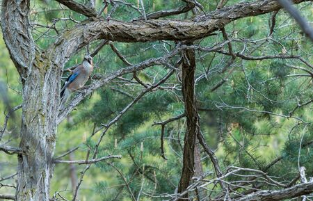 Colored bird on the branch, wild animal in a forest