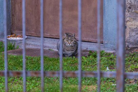 Beauty stray cat in a farm. Brown tabby hair Reklamní fotografie