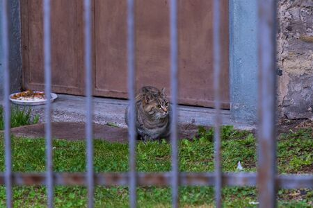 Beauty stray cat in a farm. Brown tabby hair 版權商用圖片 - 131735831