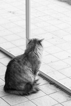 Cute siberian cat in relax in a garden. adorable domestic pet 版權商用圖片 - 133193045