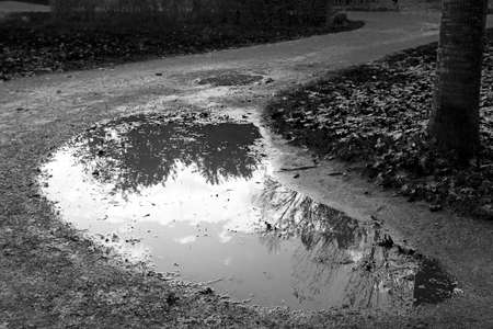 monochrome reflection in a puddle of natural park Stock Photo