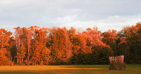 Autumn colors in a natural park