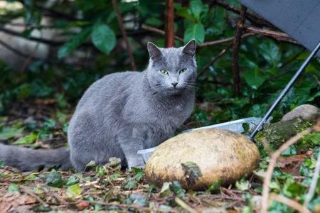 Beautiful cat under a umbrella in a garden, blue color