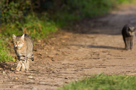 Nice cats on a country road at the sunset,