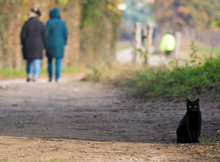 Nice black cat on a country road at the sunset in winter time