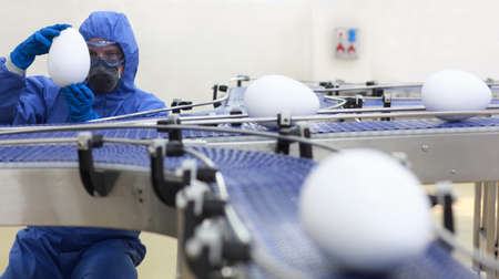 food research: engineer examining xxl size egg at production line