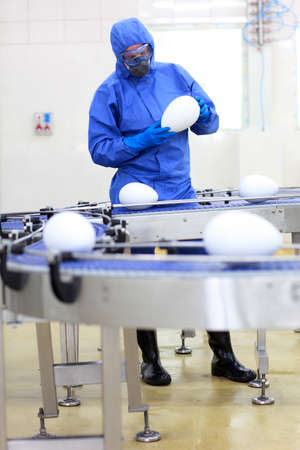 GMO factory - fully protected in blue uniform engineer examining xxl size egg at production line photo