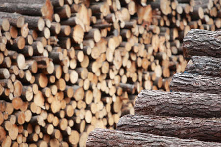 lumber industry: two piles of wooden logs - focus on the first