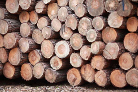 pile of wooden logs - close up