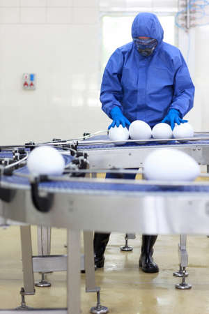 GMO eggs - fully protected in blue uniform engineer working with xxl size eggs at production line photo