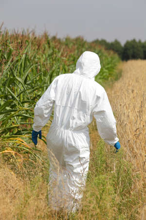 genetically modified crops: specialist  in protective uniform on field  back view Stock Photo