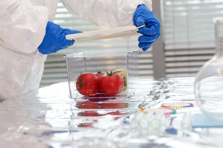 enhanced healthy: Scientist dressed in protective gear working with  vegetables in plastic container