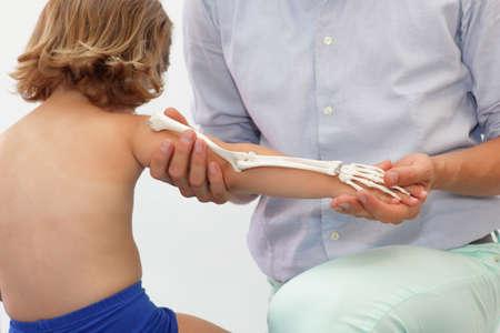 elongacion: Presentaci�n del sistema esquel�tico del miembro superior del ni�o - lecci�n de anatom�a