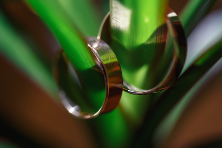 two gold wedding rings hanging on flower stalk