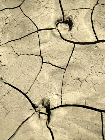 Image of dog footprints on cracked clay. Texture for background. Natural background for your design.