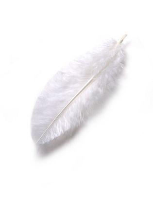 plume blanche: Une plume blanche sur fond blanc