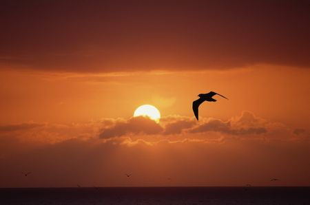 quietude: Seascape with sun, red sky, clouds and birds