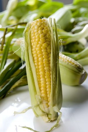 agro: corn on cob in vertical position, over a blurry background of assorted vegetables