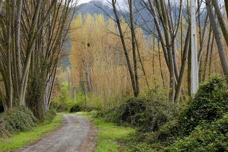 Una tarea solitaria y paceful país por carretera  Foto de archivo - 878599