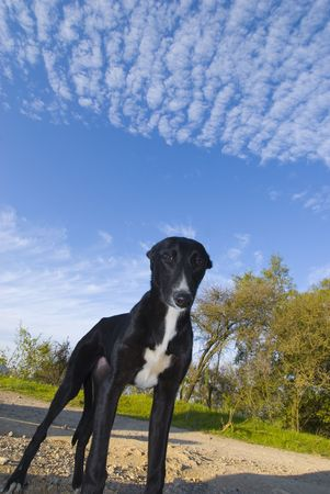ugliness: close up of black dog standing on the road with cloudy blue sky at the background Stock Photo