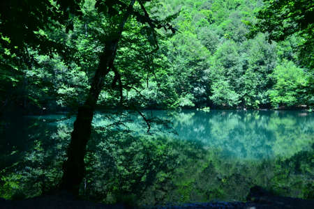 The forest and the lake will restore the human soul Stock Photo