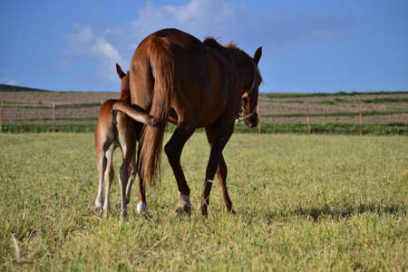 The horses are noble and charming beneficial animal