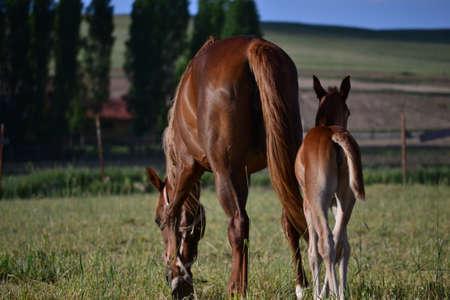De paarden zijn nobele en charmante nuttige dieren Stockfoto - 88935699