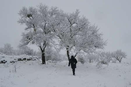 winter comes snow white