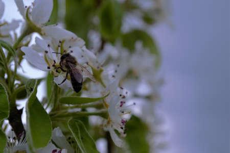 Honey bees pollinate flowers Honey bees pollen honey Stok Fotoğraf