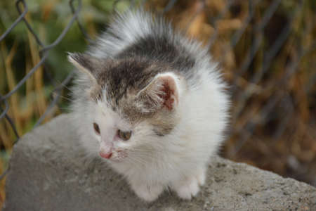 cats are a friendly and loyal animal to humans.