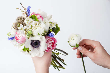hyacinths: Two hands making bouquet from pink tulips, violet grape hyacinths, white anemones, veronica violet and white buttercup on white background