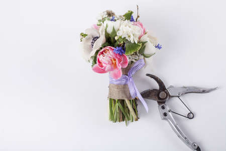 buttercups: bouquet from pink tulips, violet grape hyacinths, white anemones, violet veronica and white buttercup with violet ribbon and pruning scissors lying on white background Stock Photo