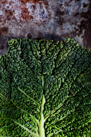 leaf close up: Cabbage leaf close up Stock Photo