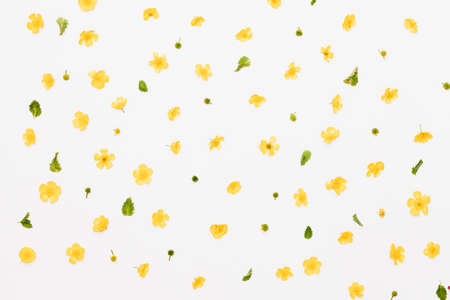Yellow field flowers with green leaves pattern on white background, flat lay Stock fotó