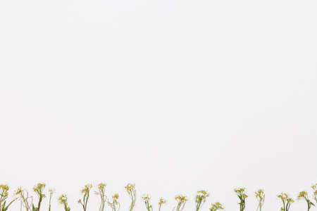 White field flowers in the bottom of white background, flat lay