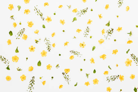 Yellow and white field flowers with green leaves pattern on white background, flat lay