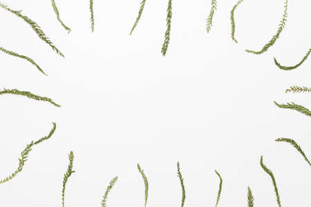 Summer field plant on white background