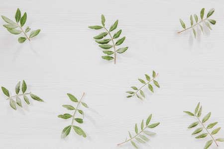 Fresh green leaves on white wooden background