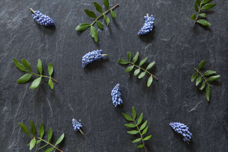 Flower pattern with grape hyacinths and green leaves on stone, dark background.  Stock fotó