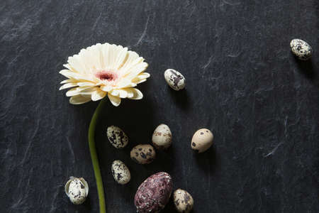 Easter background with dark stone, gerbera flower and natural eggs