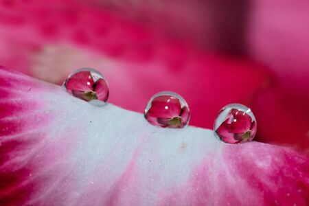 Water Drops Reflection Stock Photo