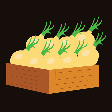 wooden crate: yellow onion in a wooden crate. vector illustration Illustration