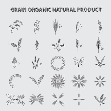 grain fields: set of grain organic natural product. concept vector illustration Illustration