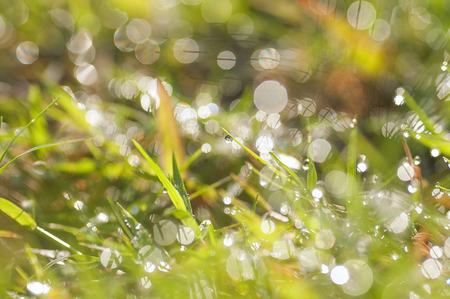 fresh morning dew drops on the grass. image