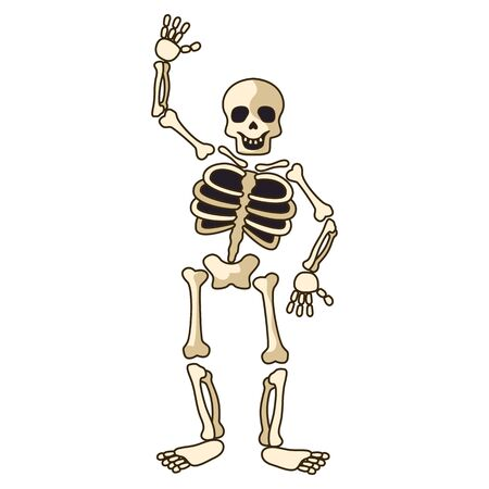 human skeleton icon isolated on white background. vector illustration Illustration