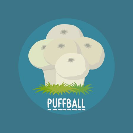 edible puffball mushrooms banner. vector illustration